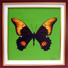 """""""Черната пеперуда"""", 30х30"""