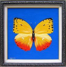 """""""Жълтата пеперуда"""", 30х30"""